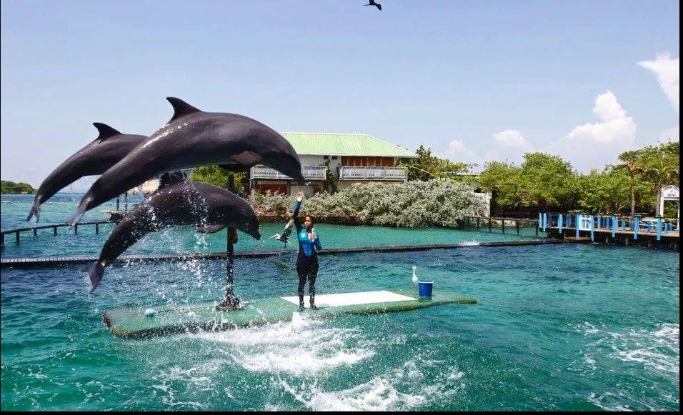 Nadar con delfines en Cartagena